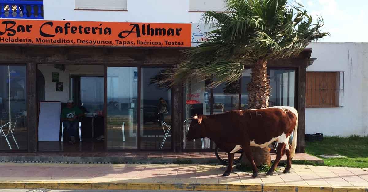 Bolonia, Spanien, Tarifa Kuh