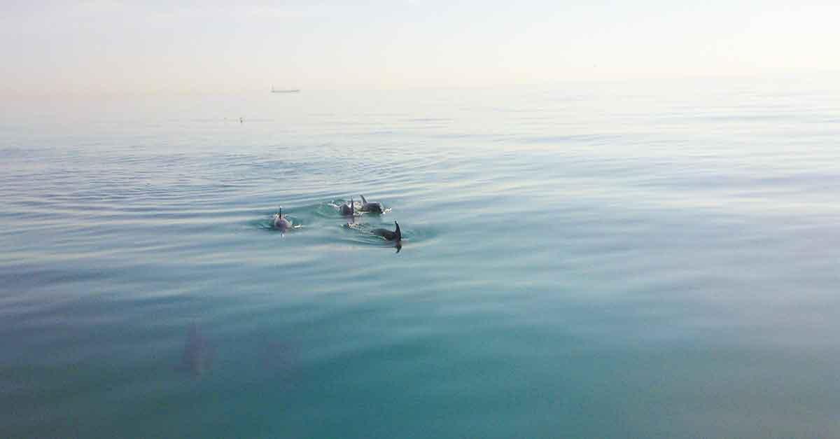 Segeln in Malaga / Delfine