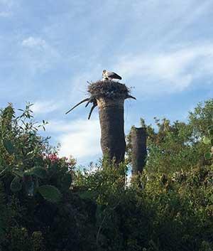 Auch Störche lieben Kap Trafalgar
