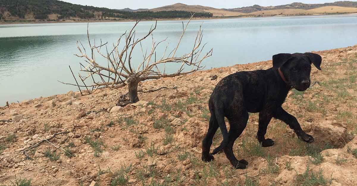 Hunde in Andalusien am Stausee