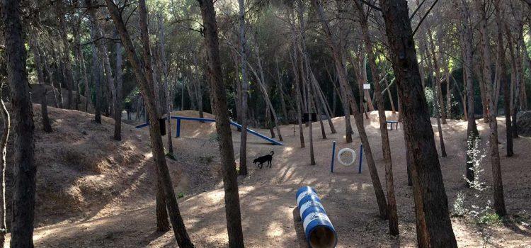Besuch im Hundepark El Morlaco in Málaga: Eine Aktivität für Herrchen und Hund