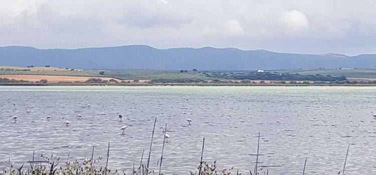 Ausflugstipp: Flamingos beobachten in der Salzlagune Fuente de Piedra